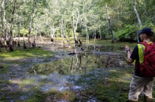 NSF Grant Studies Hydrologic Controls on Carbon Processes in Wetlands