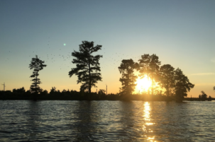 Next in the 'Did You Know' Series: A Bright Future for a Dismal Swamp