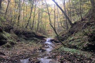 Appalachian Streams Show Long, Slow Recovery from Mining's Effects